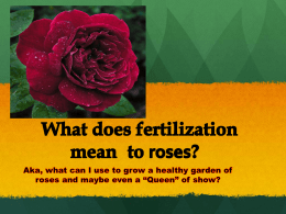 What does fertilization mean to roses?