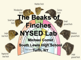 Beaks of Finches - Great Neck School District