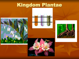 Kingdom Plantae - Ms. Pass's Biology Web Page