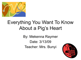 Everything You Want To Know About a Pig's Heart