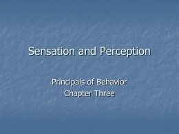 Sensation & Perception - Texas Christian University