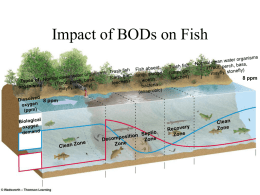Impact of BODs on Fish