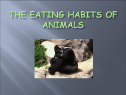 The Eating Habits of Animals