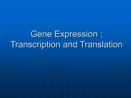 BIO 101: Transcription and Translation