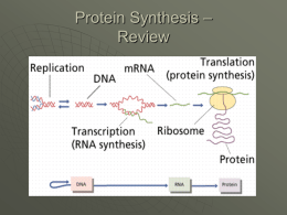 Protein Synthesis - Overview