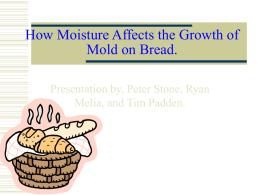 How Moisture Affects the Growth of Mold on Bread.
