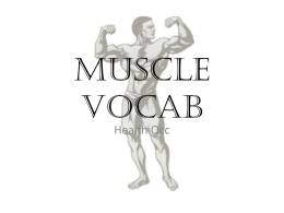 Muscle Vocab