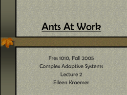 Ants At Work by Deborah Gordon