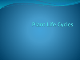Plant Life Cycles - District Five Schools of Spartanburg