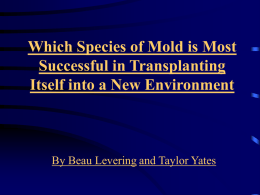 Which Mold is most Successful in Transplanting Itself in a