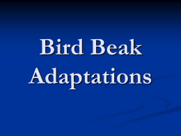 Bird Beak Adaptation - Mr. Nolde's Science Lab!!