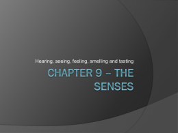Chapter 9 – The Senses
