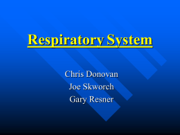 Respiratory System - Hoffman Estates High School