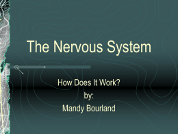 The Nervous System - Tcet Home Page | TCET