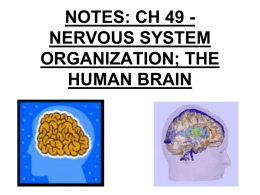 Ch 48: Nervous System – part 2 THE HUMAN BRAIN