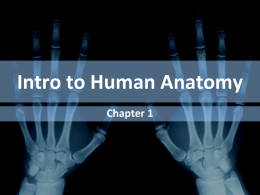 Intro to Human Anatomy