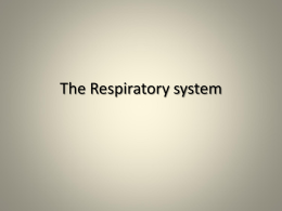 The Respiratory system - Powell County Schools