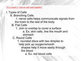 I. Types of Cells A. Branching Cells 1. nerve cells