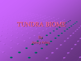 TUNDRA - UserLand Software