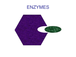 ENZYMES - ClickBiology
