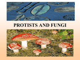 PROTISTS AND FUNGI - Althoff Catholic High School