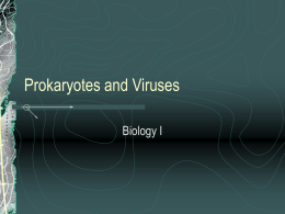Prokaryotes and Viruses - shsbiology / FrontPage