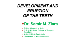 DEVELOPMENT AND ERUPTION OF THE TEETH