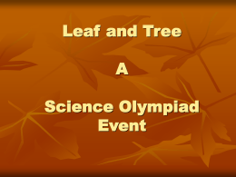 Leaf and Tree a Science Olympiad Event