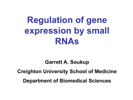 RNA interference - Creighton University