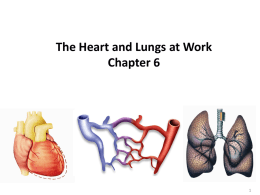 The Heart and Lungs at Work Chapter 6