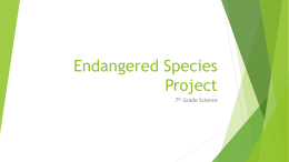 Endangered Animal Project
