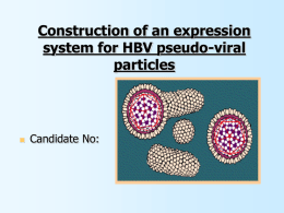 Construction of an expression system for HBV pseudo-viral particles    Candidate No: Introduction: Hepatitis B Virus • Liver Specific Hepadnavirus • Vaccine available • > 2 billion.