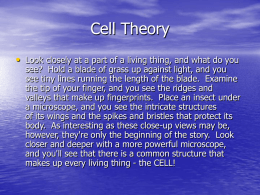 Cell Theory • Look closely at a part of a living thing, and what do you  see? Hold a blade of grass.