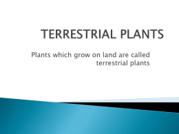 Plants which grow on land are called terrestrial plants   Types of Terrestrial Plants  Plants of hills  Plants of plains  Plants of desert  Plants of hot and wet region   PLANTS OF HILLS  Features Trees are tall,