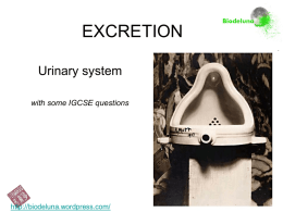 EXCRETION Urinary system with some IGCSE questions  http://biodeluna.wordpress.com/   Homeostasis. • Homeostasis is the general function that controls and keeps constant the conditions of our body.   Excretion it is the.