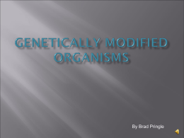 By Brad Pringle       GMO's are organisms that have had their genetic code altered. This is done to enhance a desired trait or remove an undesirable.