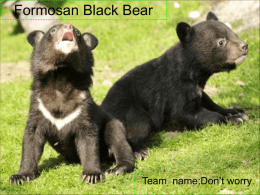 "Formosan Black Bear  Team name:Don't worry Taiwan black bear's Features: Features : They are also known as ""white-throated bears"" because of the V-shaped splotch of white."