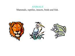 ANIMALS Mammals, reptiles, insects, birds and fish.   • 1.Mammals are animals that give milk to their babies.They have got warm blood. • 2.Reptiles are.