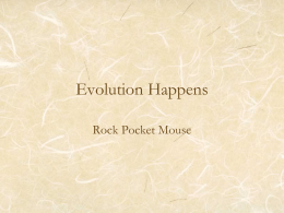 Evolution Happens Rock Pocket Mouse   Rock Pocket Mouse • Sandy colored mouse – 2 copies of same allele (sandy)  • Black colored – At least one.