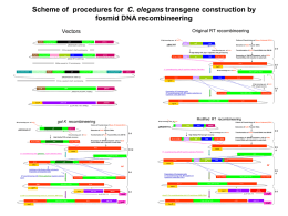 Scheme of procedures for C. elegans transgene construction by fosmid DNA recombineering Original RT recombineering  Vectors  Culture of Fosmid clone of Gene of Interest.
