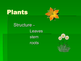 Plants Structure – Leaves stem roots Leaves Function of leaves  Trap light energy for photosynthesis  Producing sugar from photosynthesis  Exchange of gases – oxygen and carbon.