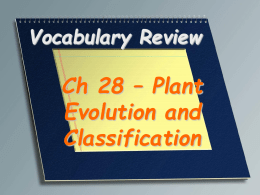 Vocabulary Review  Ch 28 – Plant Evolution and Classification A waxy or fatty and watertight layer on the external wall of epidermal cells  Cuticle.