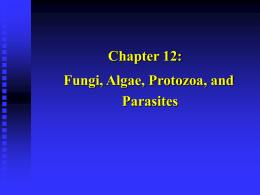 Chapter 12: Fungi, Algae, Protozoa, and Parasites I. FUNGI (Mycology)   Diverse group of heterotrophs.   Many are ecologically important saprophytes (consume dead and decaying matter)    Others are.