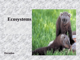 Ecosystems  Herndon Ecosystems An ecosystem is all living and nonliving things in an area.