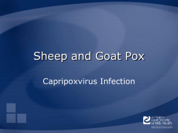 Sheep and Goat Pox Capripoxvirus Infection Overview • Organism • Economic Impact • Epidemiology • Transmission • Clinical Signs • Diagnosis and Treatment • Prevention and Control • Actions.