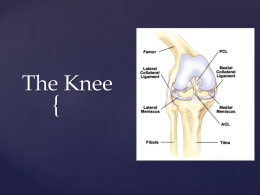 The Knee  { Background Information   Very vulnerable joint    Hinge joint flexion and extension  slight rotation 