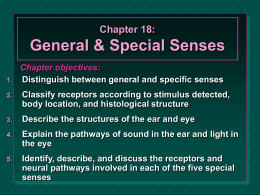 Chapter 18:  General & Special Senses 1.  Chapter objectives: Distinguish between general and specific senses  2.  Classify receptors according to stimulus detected, body location, and histological structure  3.  Describe.