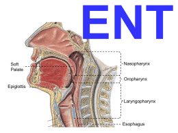 ENT Soft Palate  Nasopharynx  Oropharynx Epiglottis  Laryngopharynx  Esophagus CHAPTER 16 Head & Neck (ENT) PATHOLOGY OTOLARYNGOLOGY  OBJECTIVE: Understand the common disorders of the upper airway and upper digestive tract (i.e., head and neck)