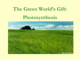 The Green World's Gift:  Photosynthesis Objectives: 1. Explain why organisms need a supply of energy.  2.