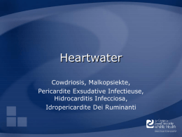 Heartwater Cowdriosis, Malkopsiekte, Pericardite Exsudative Infectieuse, Hidrocarditis Infecciosa, Idropericardite Dei Ruminanti Overview • Organism • Economic Impact • Epidemiology • Transmission • Clinical Signs • Diagnosis and Treatment • Prevention and.